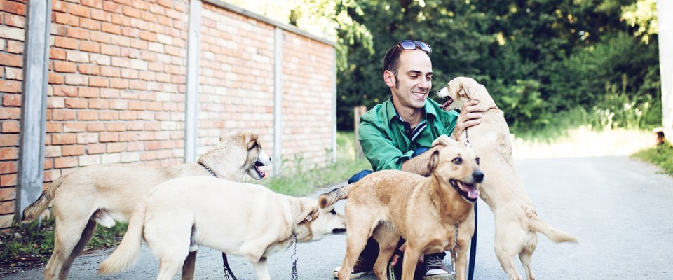 Devenir Pet sitter auto-entrepreneur